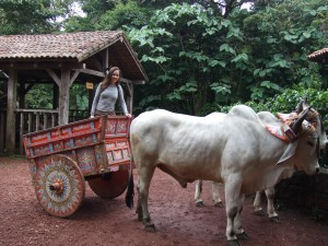 Ox Cart Ride at La Paz Waterfall Gardens, Costa Rica