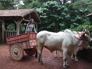 Ox Cart Ride at La Paz Waterfall Gardens, Costa Rica